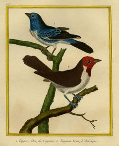 Cayenne Blue- and American Brown Tanager Martinet - Handcol. engraving - 18th c.