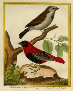 House Sparrow and Cape Cardinal by Martinet - Handcoloured engraving - 18th c.