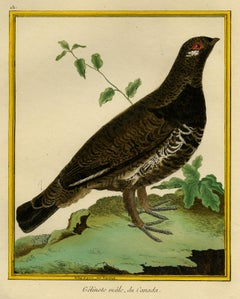 Male Red Grouse from Canada by Martinet - Handcoloured engraving - 18th century