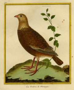Mountain Partridge by Martinet - Handcoloured engraving - 18th century