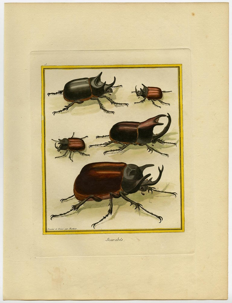 Scarab Beetles by Martinet - Handcoloured engraving - 18th century - Print by Francois Nicolas Martinet
