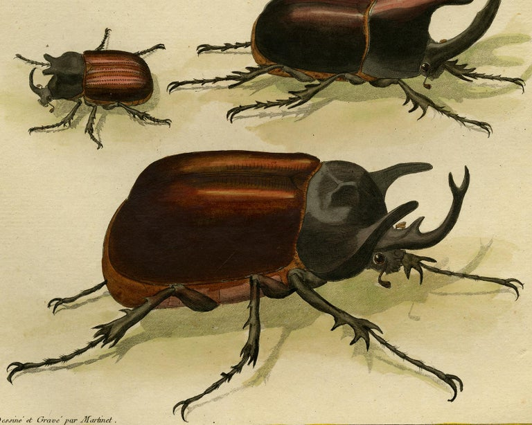 Scarab Beetles by Martinet - Handcoloured engraving - 18th century - Beige Animal Print by Francois Nicolas Martinet