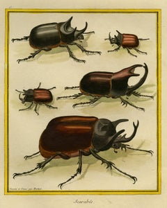 Scarab Beetles by Martinet - Handcoloured engraving - 18th century