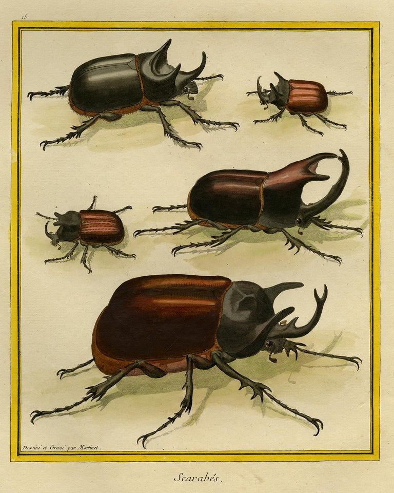 Subject: Antique print, titled: 'Scarabes.' - Plate 15. It shows: Scarab Beetles.  Description:  From: 'Histoire Naturelle des Oiseaux.', (A part of Histoire Naturelle...) by Comte de Buffon, published in Paris from 1770 to 1786. This is considered