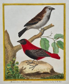 Set of four 18th century hand coloured bird engravings by Martinet circa 1765