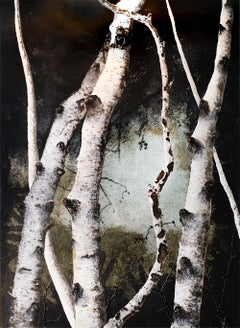 Birches IV: Contemporary Minimalist Painting of Birch Forest