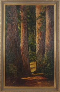 Turn of 20th Century Northern California Landscape -- Redwood Forest Floor