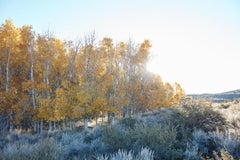 Aspen Study III - large scale photograph of Indian summer autumnal color palette
