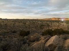 """Desert Daze ( 48 x 64"""" / 122 x 162cm )"""