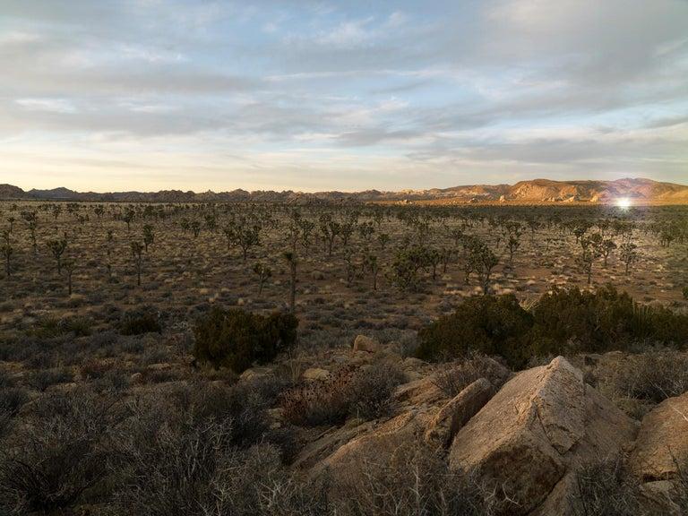 """Desert Daze ( 48 x 64"""" / 122 x 162cm ) 1"""