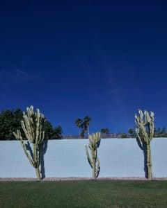 """Palm Springs ( Cactus ) 72.5""""x 58"""""""
