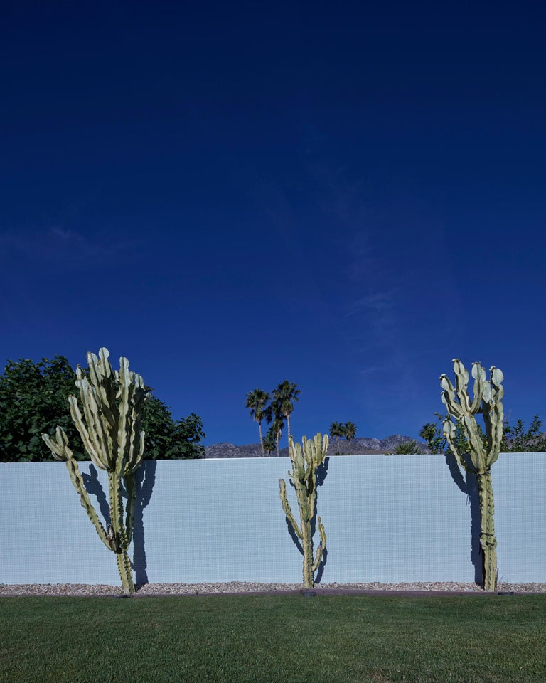 "Frank Schott Color Photograph - Palm Springs ( Cactus ) 72.5""x 58"""