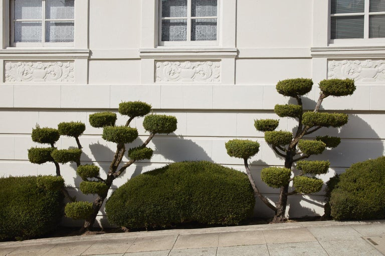TOPIARY II by Frank Schott from a series of photographic observances capturing the antics of urban gardening and striking art of topiaries' green minimalism  27 x 40 inches / 69cm x 102cm edition of 25  signed  48 x 72 inches / 122cm x 182cm edition