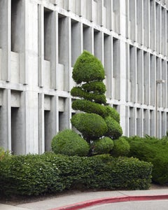 Topiary IV - large format photograph of ornamental shaped tree with architecture