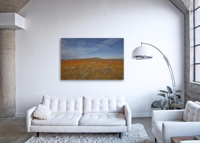 Golden State II ( 48 x 72