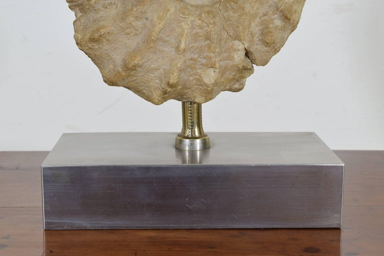 French Ammonite Fossil Mounted as a