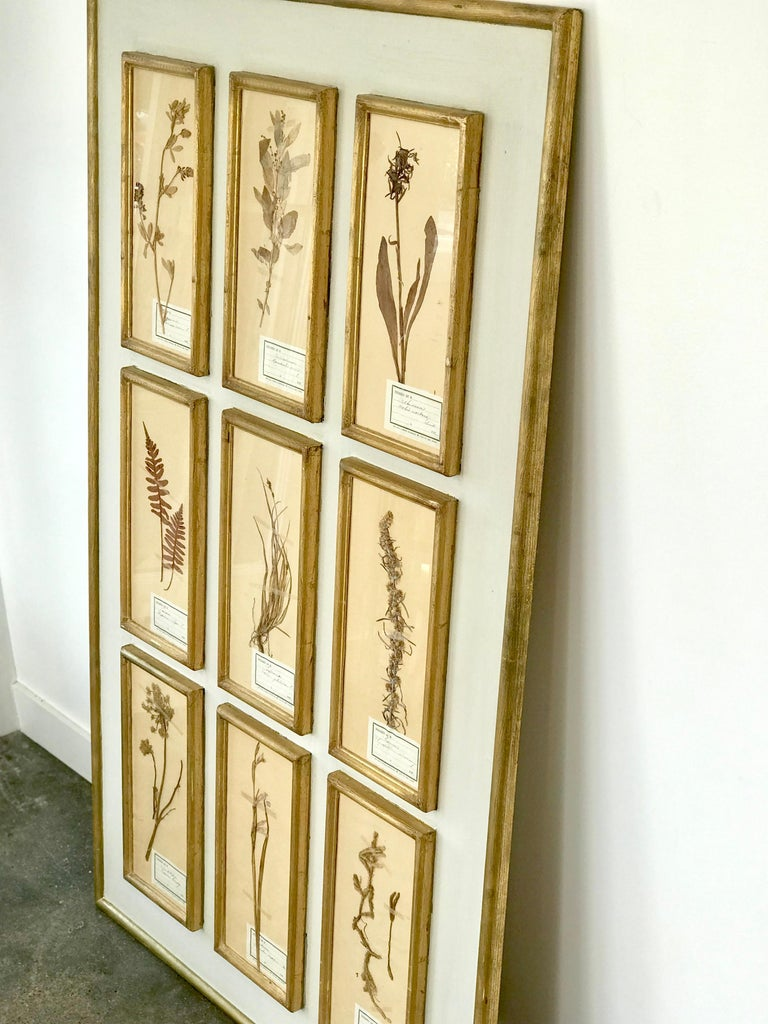 Pretty French Botanical on white board with individual gold wood frames. Each pane has a bit of scroll and a date of 19 __. Very pretty patina and would do well in a variety of interiors. This is a substantial piece.