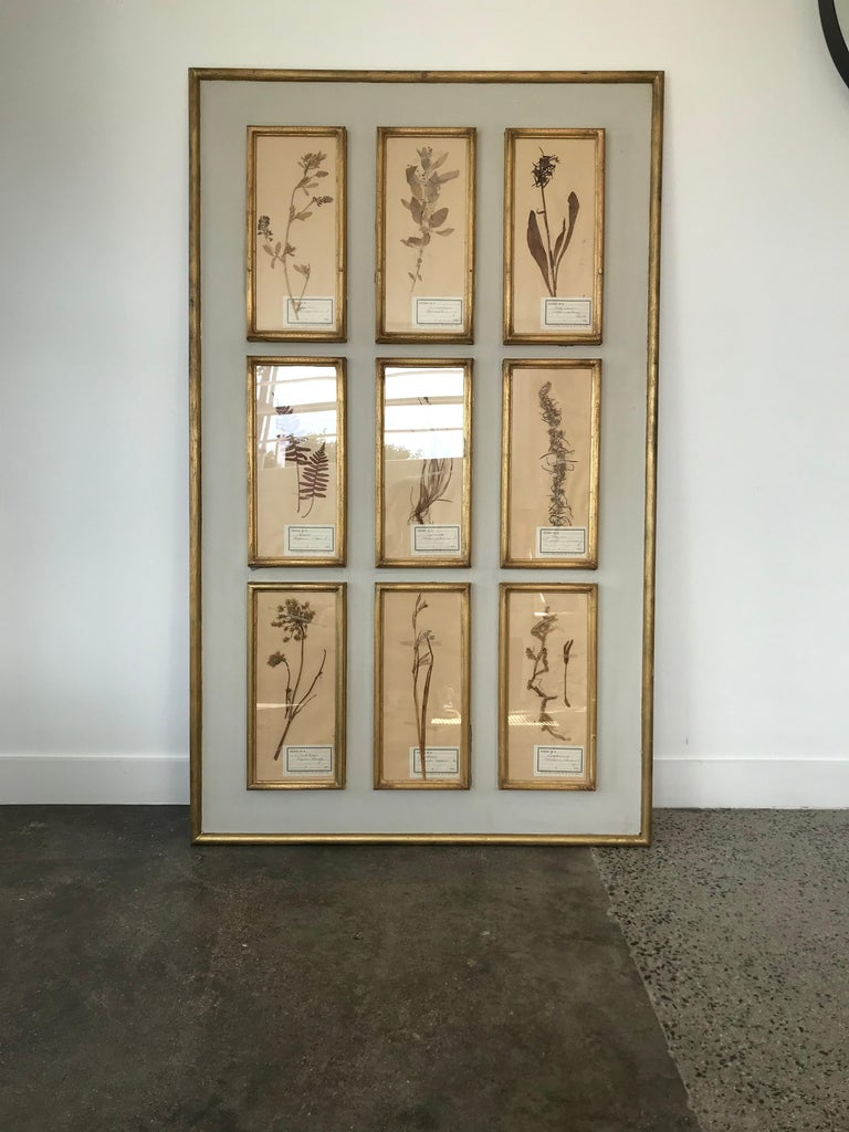 French Botanical Herbier In Good Condition For Sale In Corona del Mar, CA