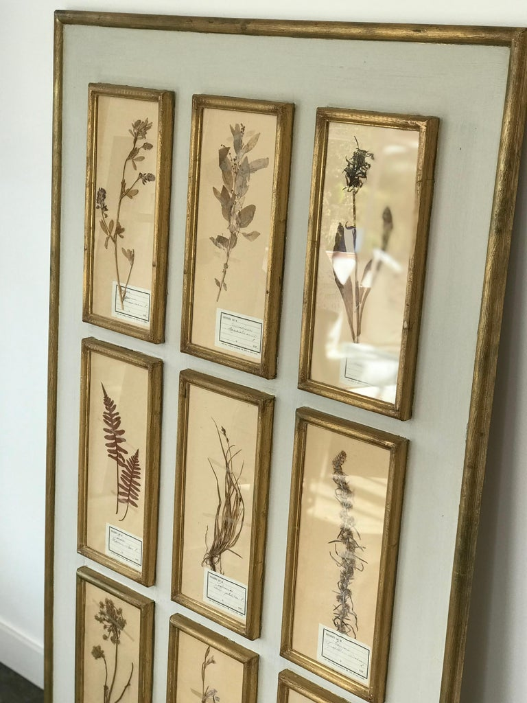 Mid-20th Century French Botanical Herbier For Sale