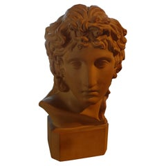 French Classical Terracotta Bust Signed R. D'Arly, Paris