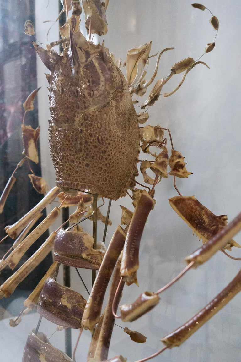 French Deconstructed Clawed Lobster Sculpture in Glass Case For Sale 3
