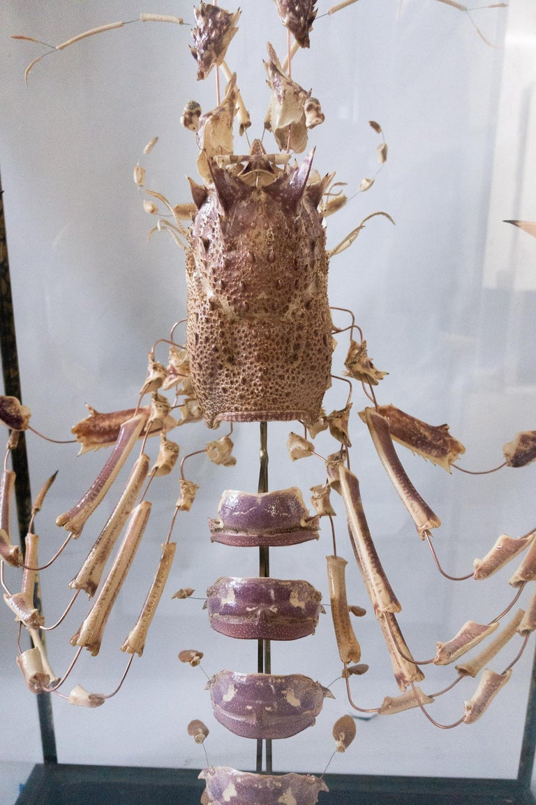 French Deconstructed Clawed Lobster Sculpture in Glass Case In Good Condition For Sale In New York, NY