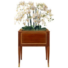 French Early 19th Century Transitional Style Mahogany and Ormolu Planter