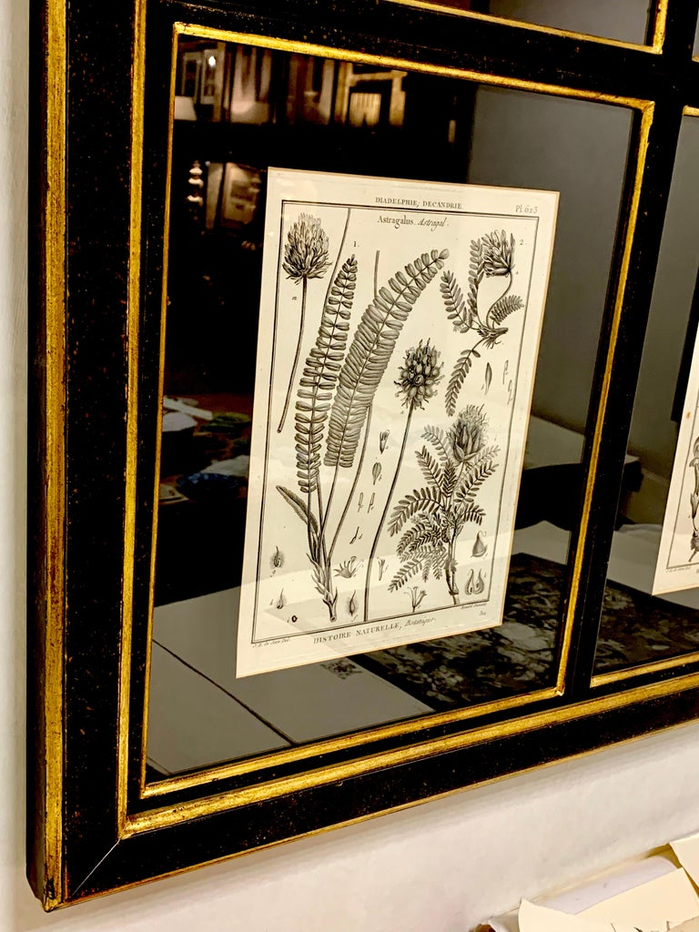 Composition of 18 antique botanical prints from the iconic encyclopaedia