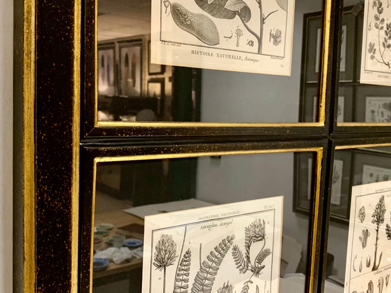 Country 18th Century French  Buffon botanical prints Composition with black frame For Sale