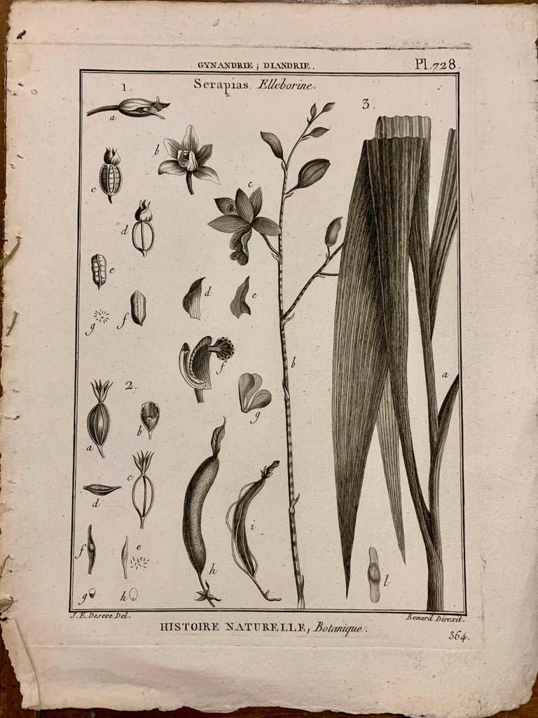 Gold Leaf 18th Century French  Buffon botanical prints Composition with black frame For Sale