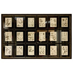 18th Century French  Buffon botanical prints Composition with black frame