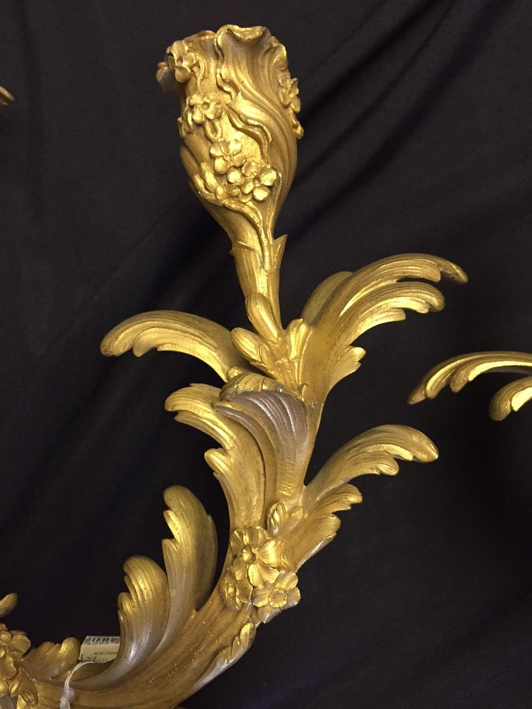 French Louis XV Style Ormolu Sconces, 19th Century For Sale 7