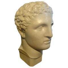 French Plaster Bust of a Classical Male