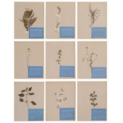 French Pressed Botanical's Set of 9