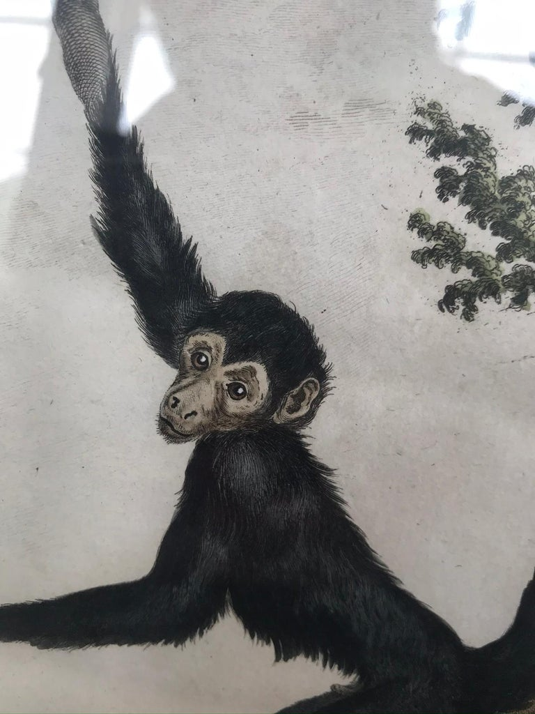 French Print of Monkey Engraving