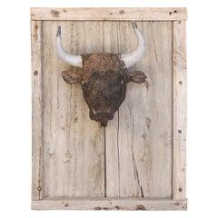 French Terracotta Bull Head on Wood Frame