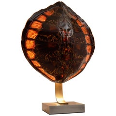 French Tortoise Shell and Brass Table Lamp, circa 1970