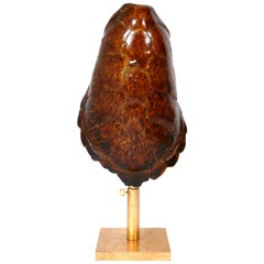 French Tortoise Shell and Gilt Metal Lamp