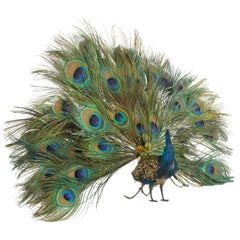 French Walking Peacock Automaton