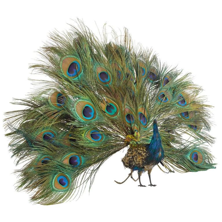 French Walking Peacock Automaton For Sale