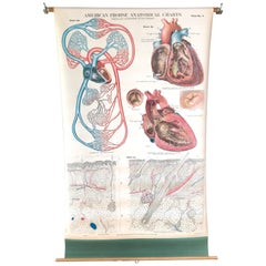 Frohse Anatomical Chart by A.J. Nystrom, Plate No. 4, Circulatory System, 1918