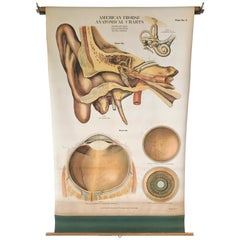 Frohse Anatomical Chart by A.J. Nystrom, Plate No. 5: Ear and Eye, 1918