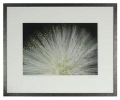 """Tropical Stars"" Big Island Hawaii Botanical Still Life Photograph, 2015"