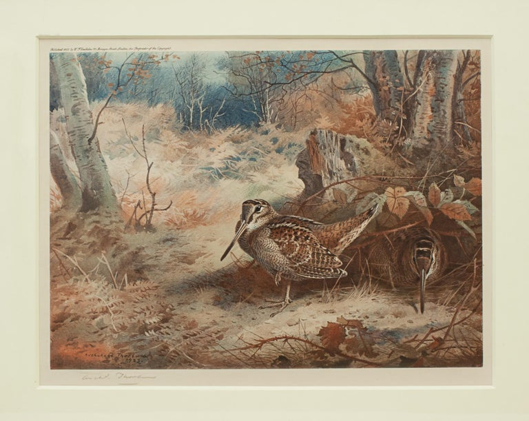 Game Bird Print of a Woodcock, after Archibald Thorburn For Sale 4