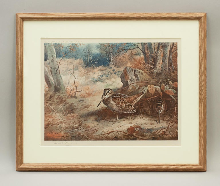 Game Bird Print of a Woodcock, after Archibald Thorburn For Sale 5