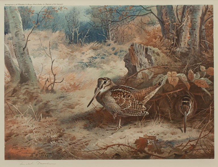 Oak Game Bird Print of a Woodcock, after Archibald Thorburn For Sale