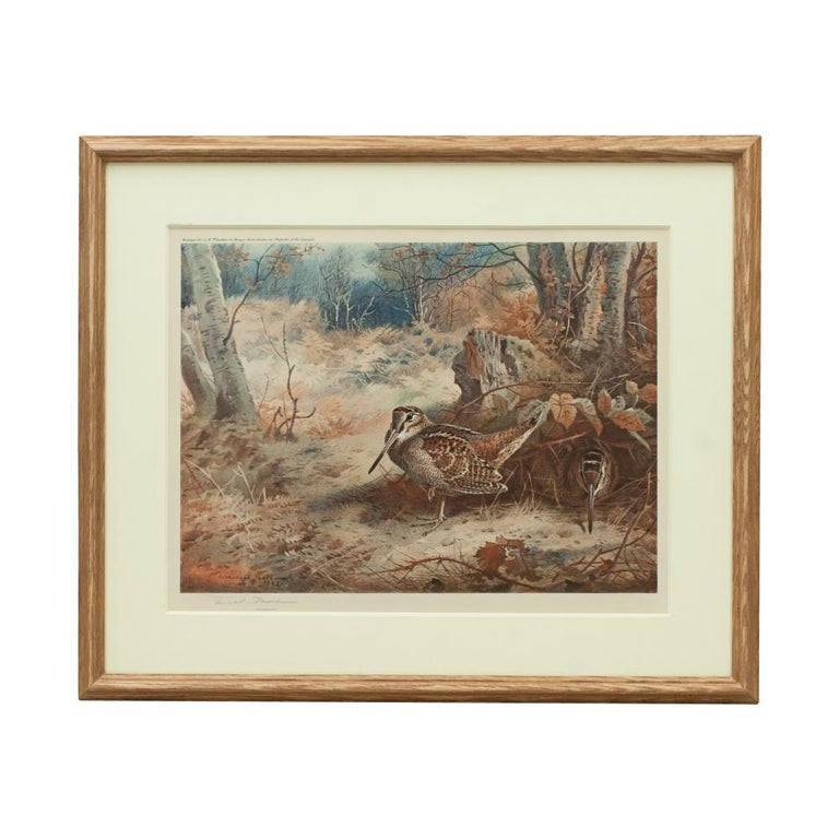 Game Bird Print of a Woodcock, after Archibald Thorburn For Sale 1