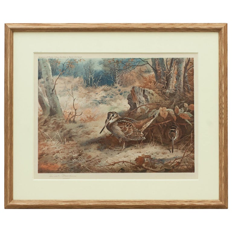 Game Bird Print of a Woodcock, after Archibald Thorburn For Sale