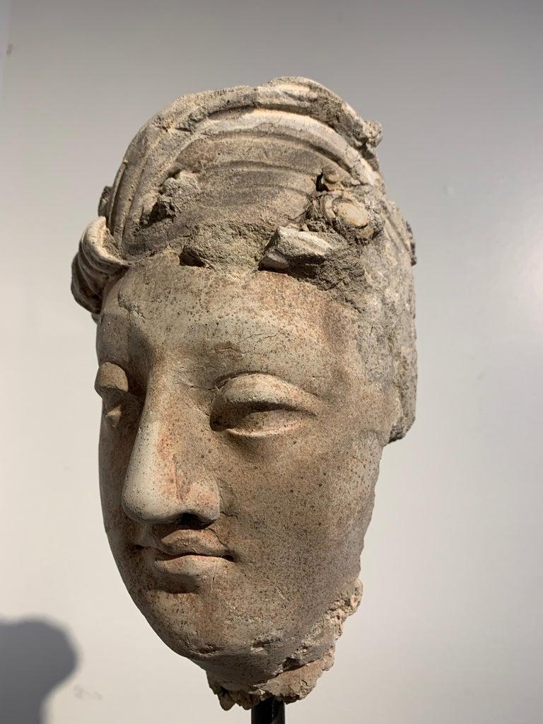 Gandharan Stucco Head of a Bodhisattva, Region of Hadda, 3rd-5th Century For Sale 4
