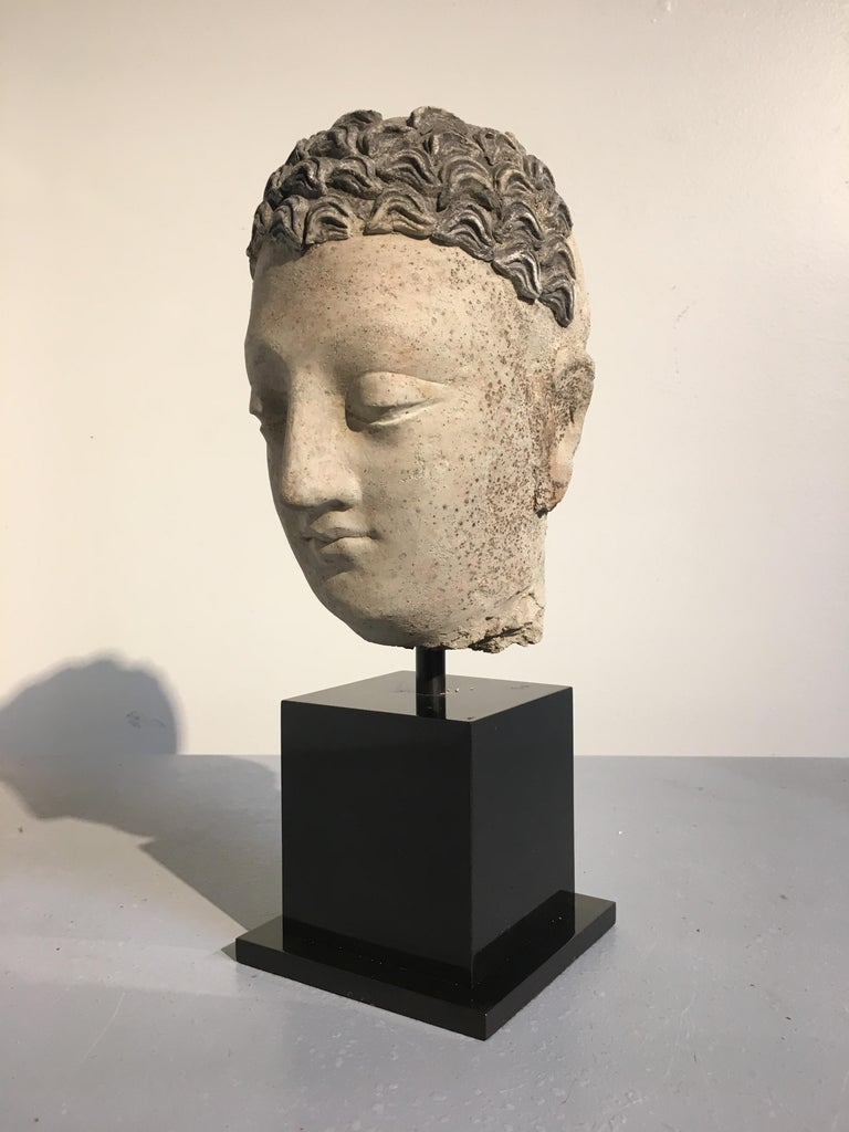 Pakistani Gandharan Stucco Head of the Buddha, 3rd-5th Century For Sale